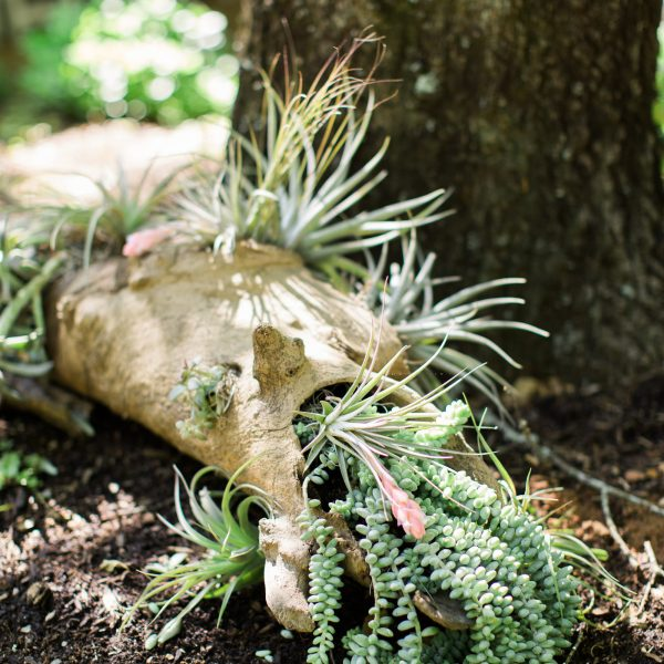 Succulents and air plant driftwood decorations at The Music Camp - Photo by Ginia Worrell Photography